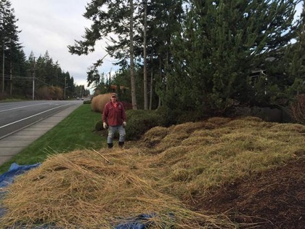 Grass and Perennial Trimming
